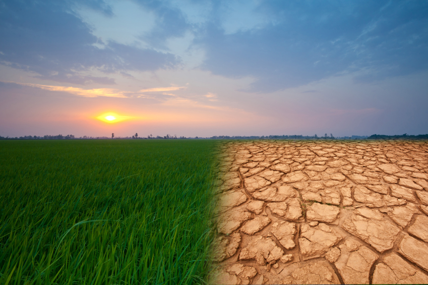 climatechange - ALREADY ALIVE ATTRACTION - No more needed irrigation for good agricultural yield in drought and heat condition - SUSTAINABLE SOLUTION FOR EFFECTIVE FARMING IN CIRCUMSTANCES OF DROUGHT AND HEAT