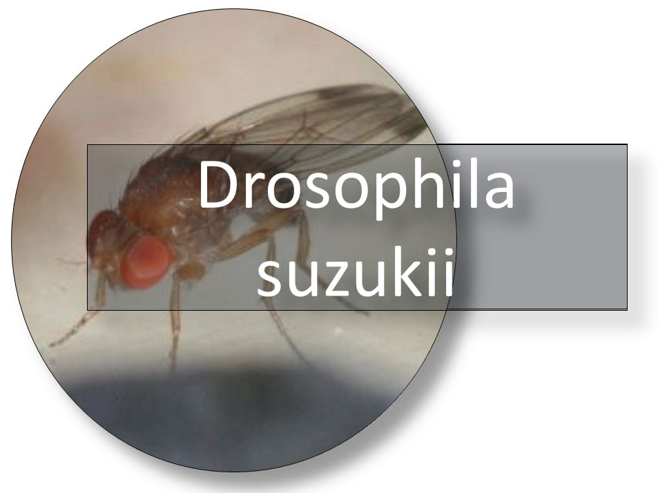 116052014 644479852832136 4040417981971264376 n naslovna 111111 - EXCELLENT NATURAL & SUSTAINABLE SOLUTION to prevent problems with Drosophila suzukii