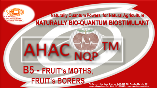 B5 AHAC NQP TM B5 Fruits moth Fruits borers - EXCELLENT NATURAL, BIO-QUANTUM SUSTAINABLE SOLUTION to NATURALLY  PREVENT PROBLEMS with Tomato Leaf Miner/ Moth (TUTA ABSOLUTA POVOLNY)