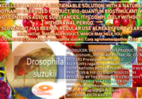 Drosophila suzukki www.cora agrohomeopathie.com  200x140 - EXCELLENT NATURAL & SUSTAINABLE SOLUTION to prevent problems with Drosophila suzukii