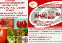 Tuta Absoluta Povolny BIOQUANTUM NATURAL SOLUTION AHAC NQP TM B5 fruit moth fruit borer www.cora agrohomeopathie.com  200x140 - EXCELLENT NATURAL, BIO-QUANTUM SUSTAINABLE SOLUTION to NATURALLY  PREVENT PROBLEMS with Tomato Leaf Miner/ Moth (TUTA ABSOLUTA POVOLNY)