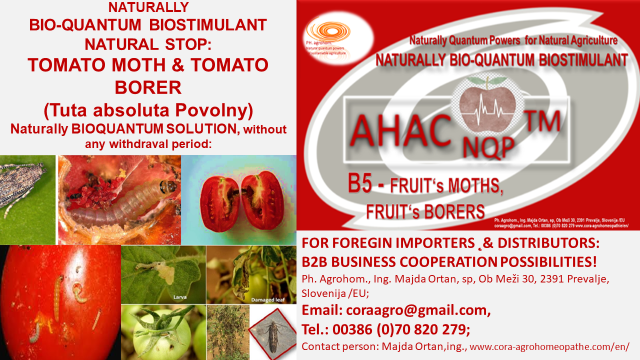 Tuta Absoluta Povolny BIOQUANTUM NATURAL SOLUTION AHAC NQP TM B5 fruit moth fruit borer www.cora agrohomeopathie.com  - EXCELLENT NATURAL, BIO-QUANTUM SUSTAINABLE SOLUTION to NATURALLY  PREVENT PROBLEMS with Tomato Leaf Miner/ Moth (TUTA ABSOLUTA POVOLNY)