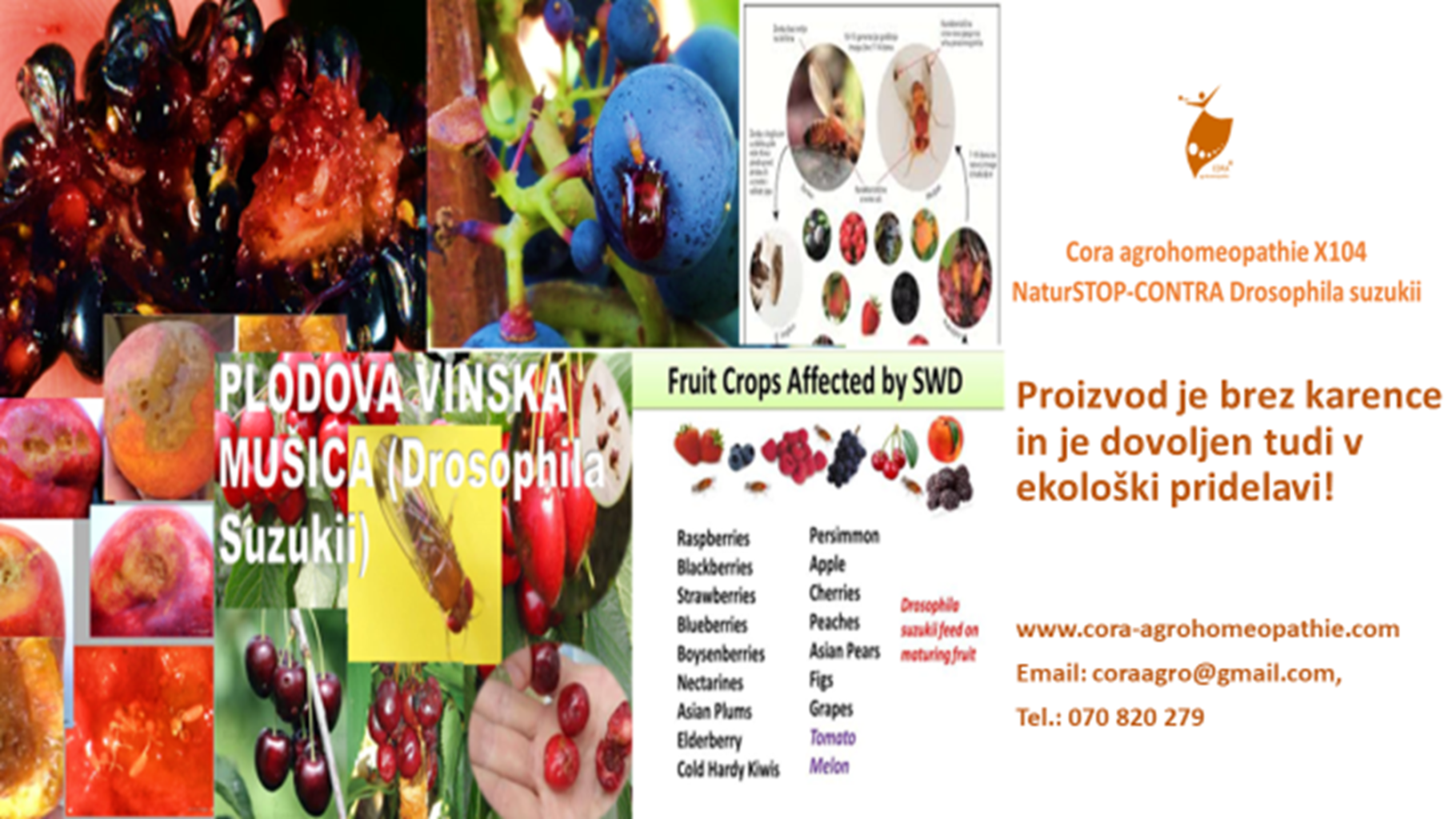 NARAVNI STOP PLODOVA VINSKA MUŠICA Cora agrohomeopathie X104 NaturSTOP CONTRA Drosophila suzukii 1820x1024 - EXCELLENT NATURAL & SUSTAINABLE SOLUTION to prevent problems with Drosophila suzukii